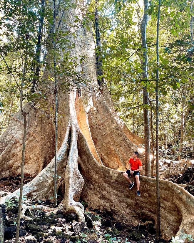 Vô số điểm check-in tuyệt đẹp ở rừng Nam Cát Tiên